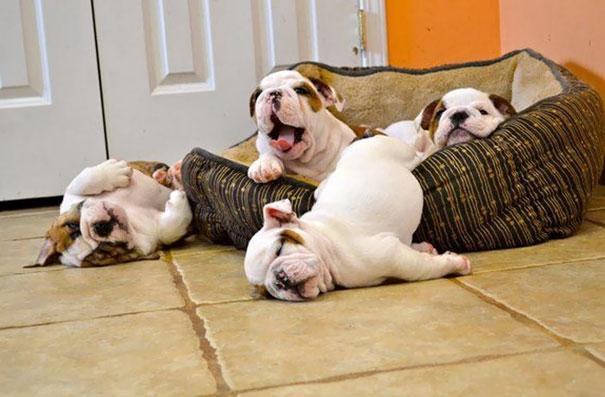 Buồn ngủ đến lăn long lóc luôn kìa.