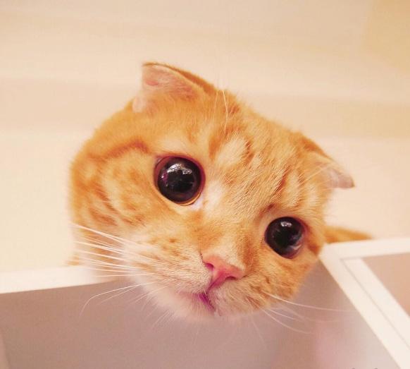- Mẹ ơi, con đói!