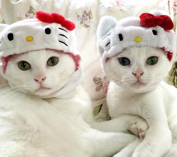 Rõ con mèo Kitty có đáng yêu bằng tụi mình đâu, sao lại cứ phải hóa trang thành nó. Thật bực mình!
