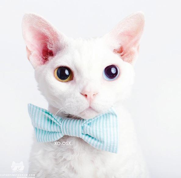 Lạnh lùng, kiêu sa và xinh đẹp chính là những tính từ chuẩn nhất dành cho loài mèo.