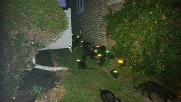 Một trong những lí do khiến nhiều người ghét mèo.
