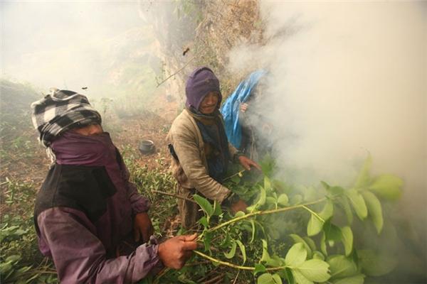 Để bắt đầu, họ sẽ hun khói để đuổi ong ra khỏi tổ.