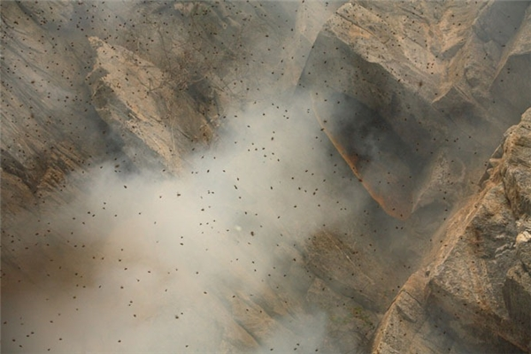 Hàng ngàn con ong dữ tợn túa ra khắp một mảng núi.