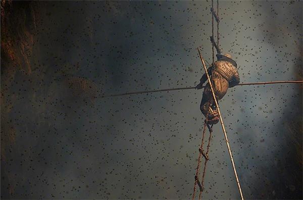 Người thợ săn lúc này sẽ leo lên cao trên những chiếc thang dây tự bện.