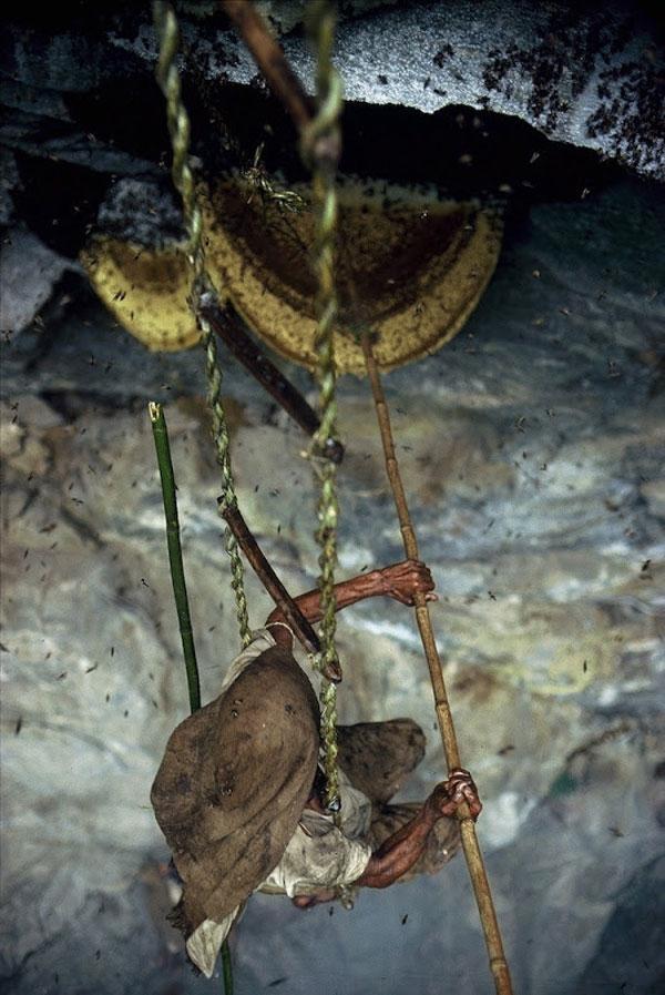 Các thợ săn sẽ dùng một cây tre dài có gắn lưỡi liềm để cắt đứt tổ ong khỏi vách đá.