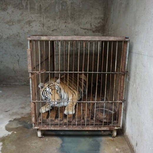 Số phận chung của chúng là cái chết lạnh lẽo trong ngục tù. (Ảnh: PETA)