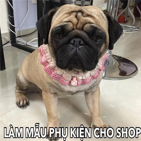 Làm người mẫu cho các shop, có vẻnhư hot girl quá bận rộn.