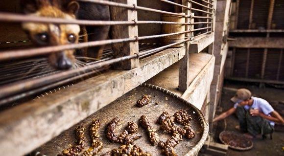 Ánh mắt tội nghiệp của một chú chồn khi bị giam hãm và ép ăn liên tục.