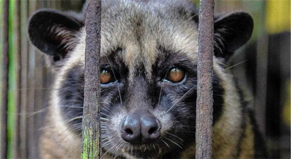 Đôi mắt ánh lên nỗi đau khổ, oán ứccủa một kẻ vô tội bị tuyên án tử hình.
