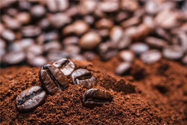 """Nhiều nơi trên thế giới đã bắt đầu """"tẩy chay"""" cà phê chồn nhân tạo sau khi biết được số phận bi ai mà những chú chồn hương phải trải qua."""