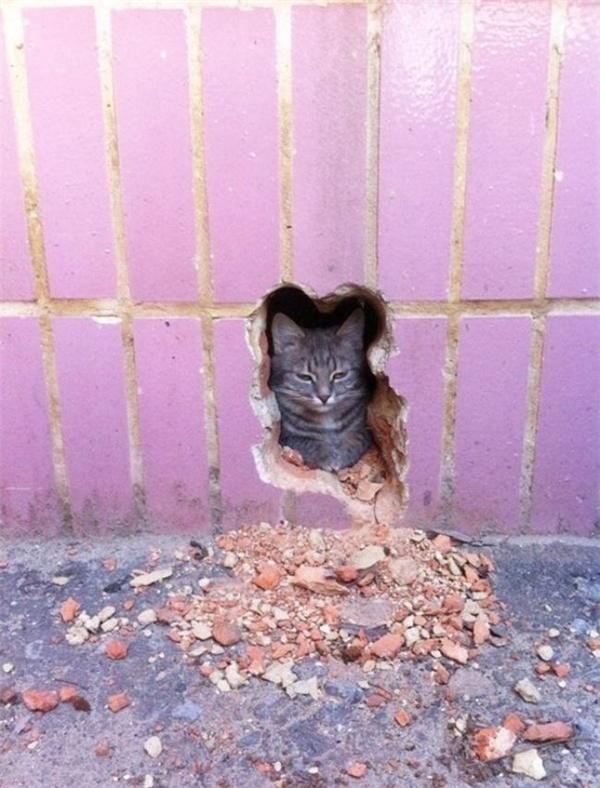 Wow, nội lực của anh ấy thật là phi thường, chỉ một cú húc đầu đã làm bức tường thủng lỗ.