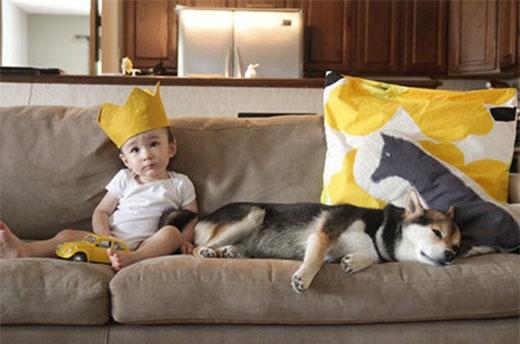 Maru được mệnh danh là chú chó săn hạnh phúc nhất mạng xã hội.