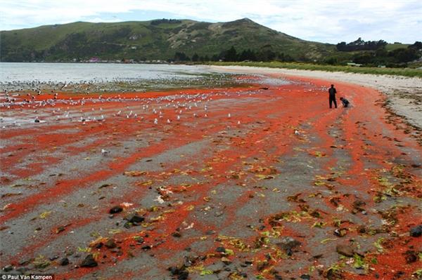 ...và bờ biển phủ một màu đỏ rực rỡ.