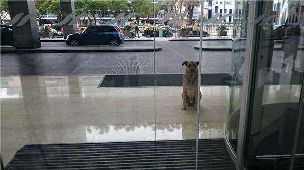 Chú chó hoang luôn đợi Olivia ở trước cửa khách sạn. (Ảnh: FBNV)