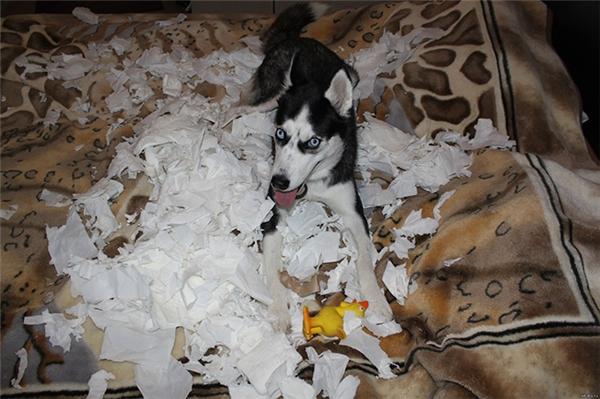 Nệm không êm, phải lót thêm mớ giấy vệ sinh này lên mới gọi là êm nhé.