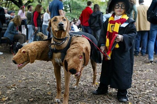 Từ khi nào màHarry Potterlại thuần hóa được chó ba đầu thế?
