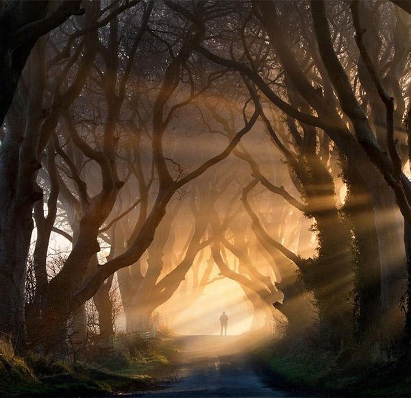 Con đường huyền ảo này trông hệt như đang dẫn dắt ta vào thế giới cổ tích đầy mộng mơ thời thơ ấu vì hai bên đường là hàngsồi cổ thụđược trồng từ thế kỷ XVIII. (Ảnh: Internet)