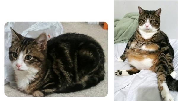 Trên đời, có những con mèo chỉ cần thở thôi cũng mập. (Ảnh: ThanhDung Ng)