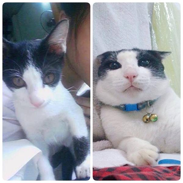 Chú mèo đã thay đổi quá nhiều đến nỗi chủ của nó cũng giật mình. (Ảnh: Quyên Bông)