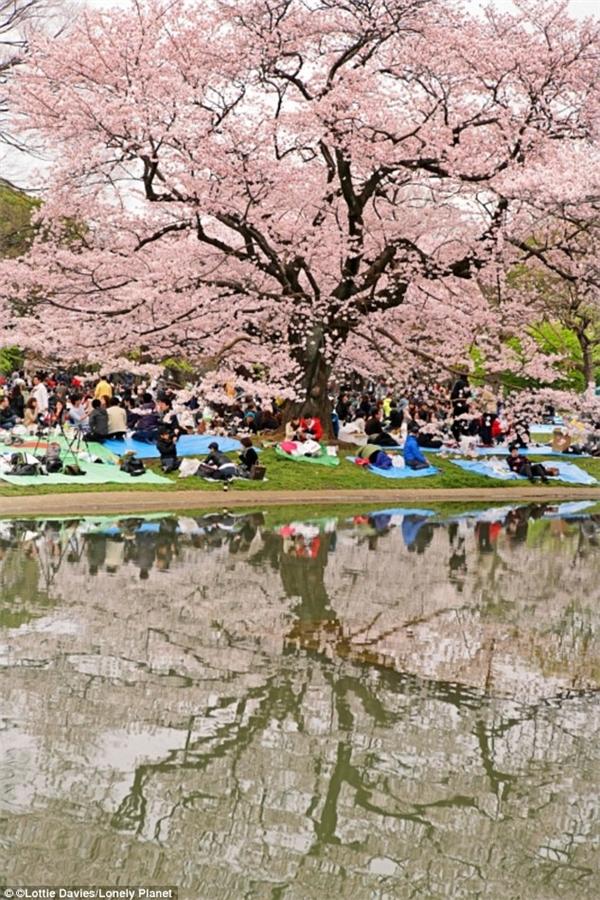 Vào ngày cuối tuần, người dân Tokyo thường hay ra công viên Yoyogi để dã ngoại, chơi trống, nhảy múa. (Ảnh: Lonely Planet)