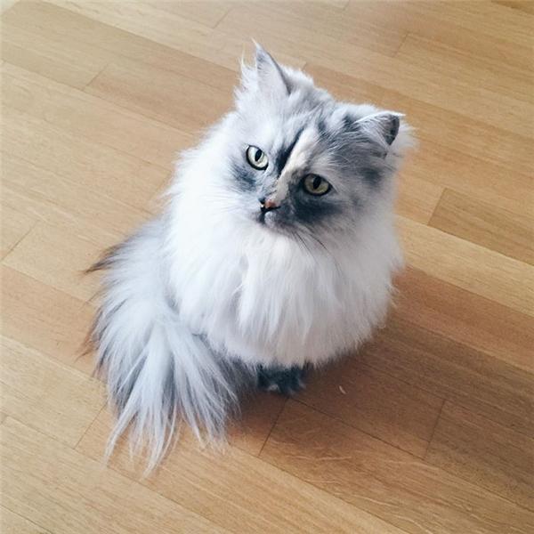 Một ngày buồn vu vơ nào đó, Alice bỗng cần một sự chở che. Dẫu sao, Alice vẫn chỉ là một cô mèo không hơn không kém.