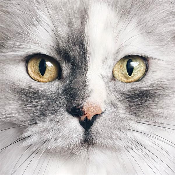 Ngược lại với loài chó chuyên đi làm trò hề cho thiên hạ, Alice cho thấy một đôi mắt vương quyền và cái nhìn đầy kiêu hãnh của một nữ hoàng đích thực.