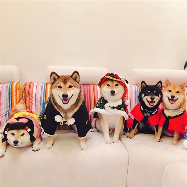 Không phải lúc nào cũng tập hợp được cả 6 đứa nó lại chụp một bức ảnh tập thể gia đình.