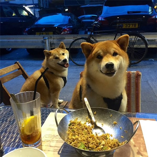 Dù đi ăn hay đi chơi thì tác phong cũng rất nghiêm túc.