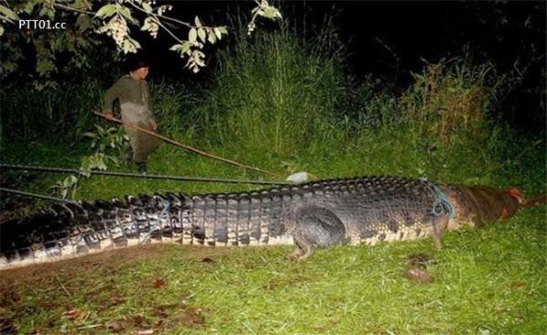 Chú cá sấu Lolong nặng hơn 1 tấn hiện đang là ngôi sao sáng ở khu du lịch sinh tháiAgusan.