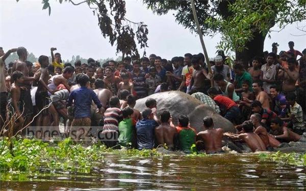 Cảm phục hành động của hàng trăm dân làng khi thấy voi mắc kẹt