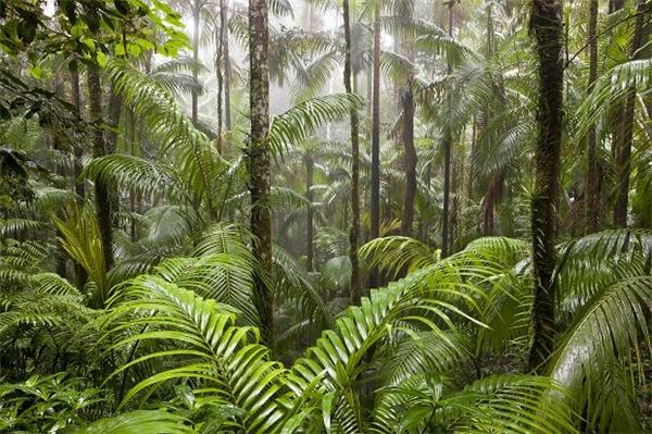 Gần như mang cả khu rừng vào không gian khách sạn.
