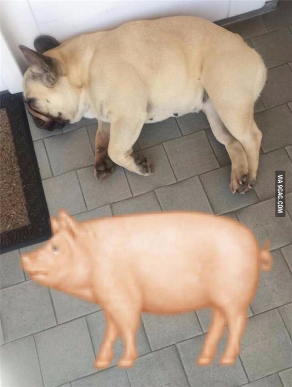 Hãy tìm điểm khác nhau giữa hai con vật trong bức ảnh.