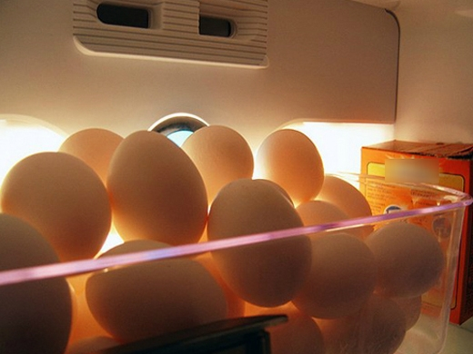Nếu bảo quan trứng trong tủ lạnh, bạn cầnquét mộtlớp dầu ăn hoặc dầu ô liu quanh vỏ trứng để tăng thời gian bảo quản lên một tháng.