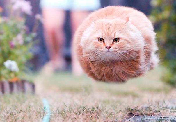 Khinh khí cầu mèo vô tìnhlạc bước đến Trái đất.