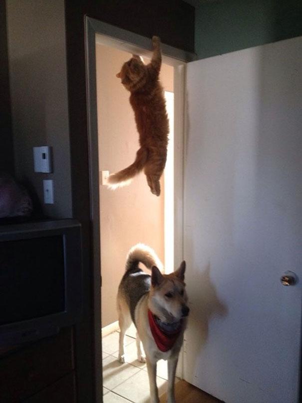 Cái con mèo phá bĩnh giấc ngủ của anh mới đây trốn đi đâu rồi?