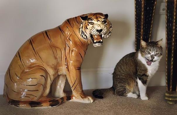 Thôi bỏ đi mèo à. Cố diễn thế nào cũng không ra dáng hổ sư phụ được đâu.