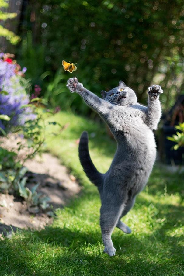 Vô tư bắt bướm ngoài vườn.