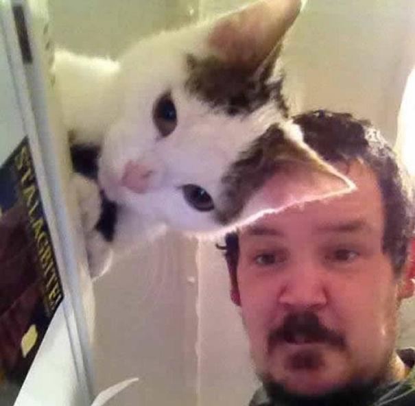 Sau khi chụp xong tấm ảnh này, ông ấy mới nhận ra mình nuôi một con mèo có đôi tai trong suốt.