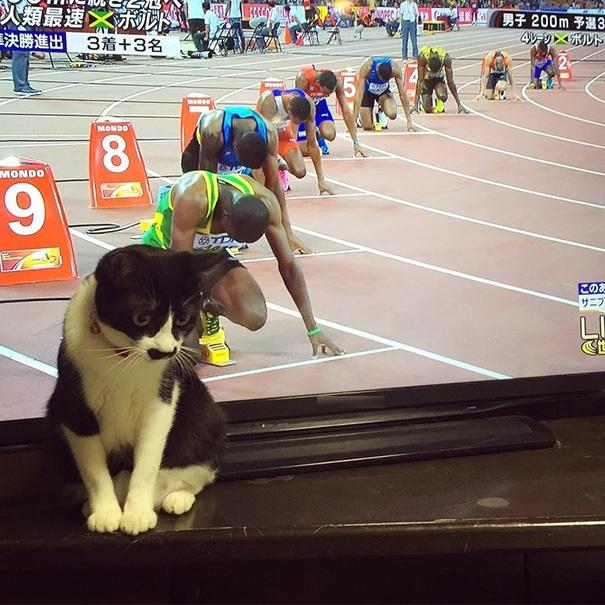 Ai nói mèo không thể tham gia thi đấu thể thao?