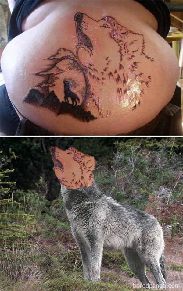 Con sói này chắc đang hát dân ca gọi bạn bè đây mà.