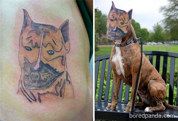 Chuyện kể rằng ngày xưa có một chú chó có cái mũi heo.