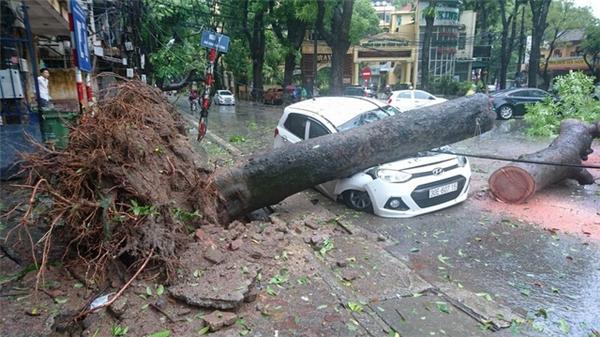 Cây đổ xuống ô tô sau cơn bãoMirinae,cơn bão số 1vừa qua. (Ảnh: TTXVN)