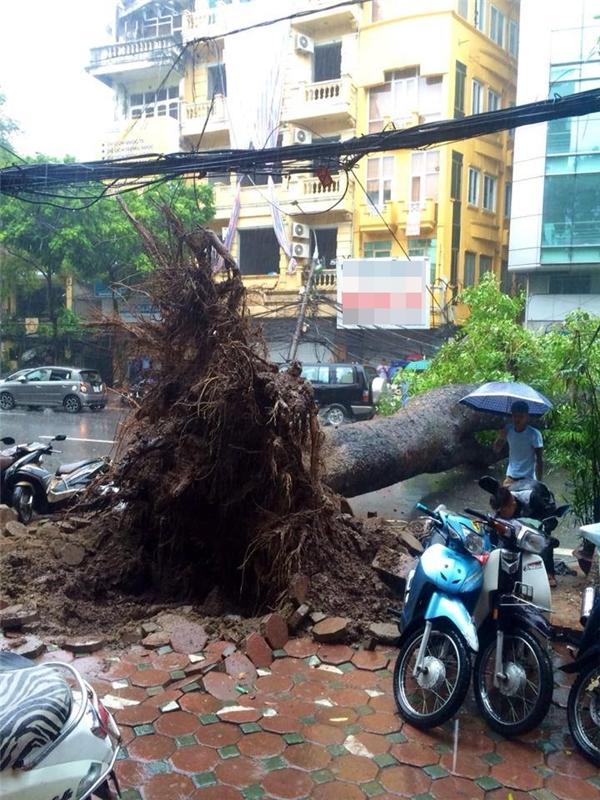 Cây lớn đổ chắn ngang đường Phan Chu Trinh, Hà Nội.