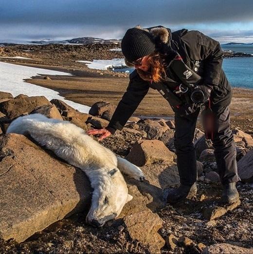 Nhiếp ảnh gia phát hiện xác một chú gấu.