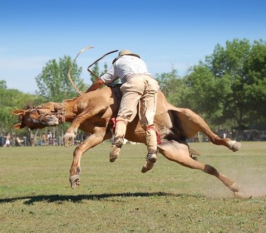 Trước khi ngã chú ngựa có một gương mặt rất là hoang mang.