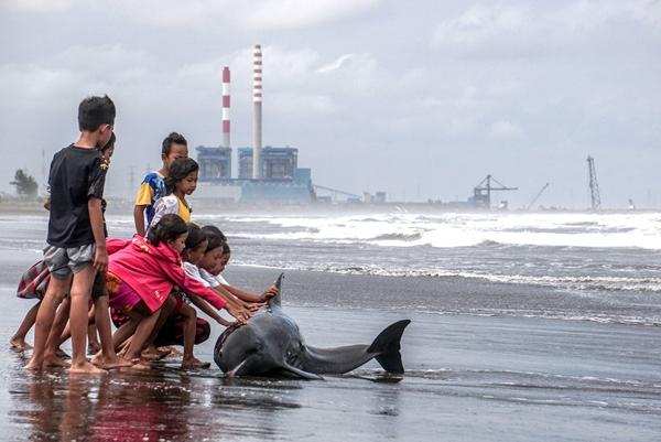 Những đứa trẻ đang cố gắng đẩy con cá heo trở lại đại dương sau khi nó bị đánh dạt vào bờ bởi thời tiết xấu và thủy triều lên cao ở trung tâm Java,Indonesia.