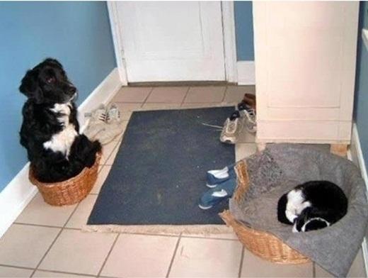 Một chú chó đã cam chịu số phận của mình.