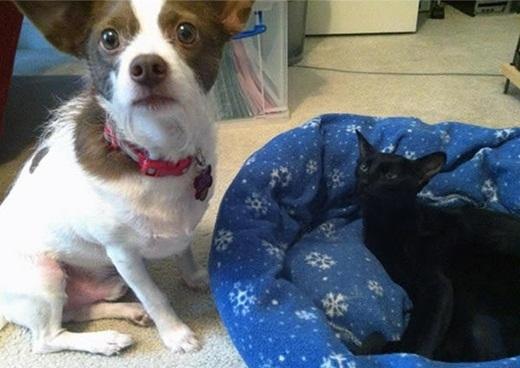 """Rồi giờ tính sao? Ngủ dưới nền tiếp hả?"""