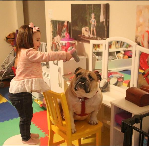 Erin biết sấy lông cho Harvey nữa này, dù vẻ mặt của chú chó quan ngại sâu sắc.