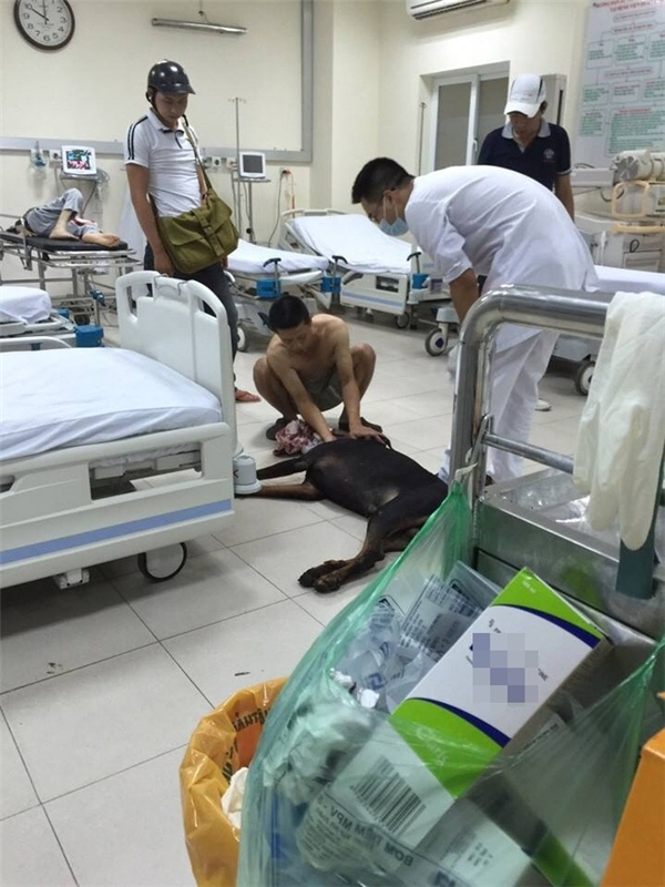 Theo anh T., khi vào viện, chủ chú chó Doberman quỳ lạy van xin các bác sĩ cứu giúp khiến nhiều người vô cùng xúc động.